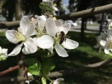 Apple iPhone SE camera samples - Apple iPhone SE review