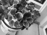 Monochrome camera samples - Huawei P9 Plus review