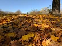 Camera samples, daylight: Pixel XL HDR+ Auto - iPhone 7 Plus vs. Pixel XL