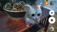 Kitten scene - Lenovo Phab2 Pro review