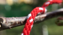 Downscaled macro shots - Olloclip Review