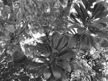 Black and white samples - f/2.0, ISO 50, 1/170s - Lenovo Moto Z2 Force review