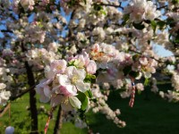 The colors of Spring - Samsung Galaxy S8+review