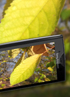 Bunch of Sony Ericsson XPERIA X10 camera and video samples