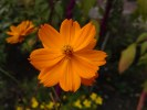 Sony Ericsson Satio camera sample