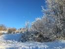 Apple iPhone 6s Plus - Snow Shootout review