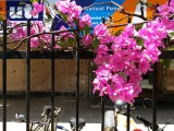 Photos taken by the Galaxy C9 Pro - Samsung Galaxy C9 Pro review