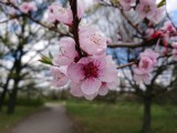 Sony Xperia XZs 19MP camera samples - Sony Xperia XZs review