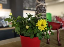 Portrait mode samples on a plant - f/0.9, ISO 205, 1/50s - vivo NEX Dual Display review